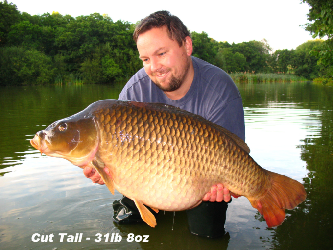cut-tail-31lb-8oz