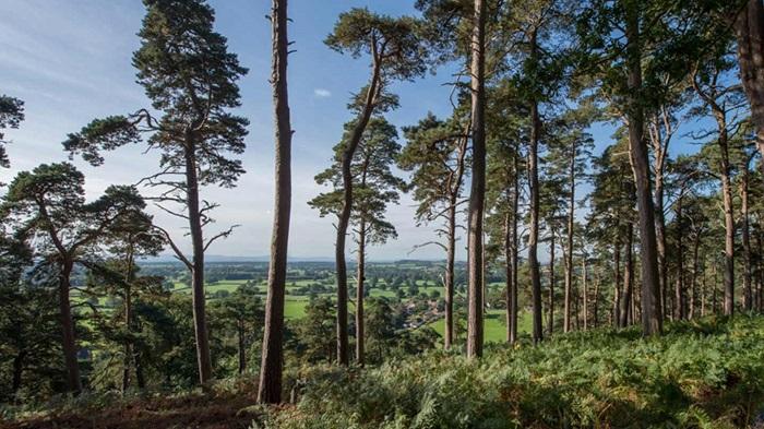 Corbet Wood 1